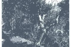 Oliveto-Variation I