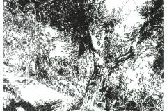 Oliveto-Variation III